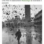 #sescelgo
